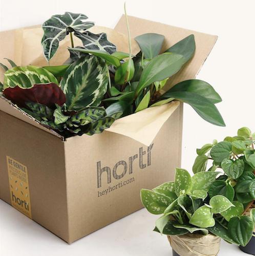 Horti Box